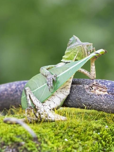PAY-thin-lizard.jpg